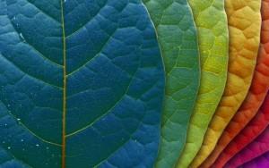 pantone-leaves